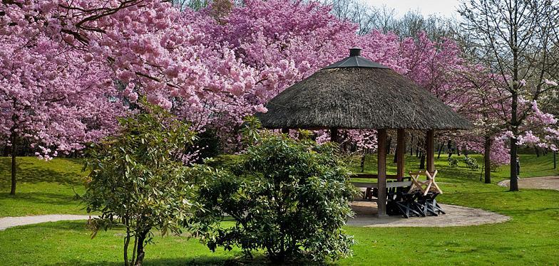Il Y A Deja 25 Ans Que Hasselt Possede Son Jardin Japonais Focus